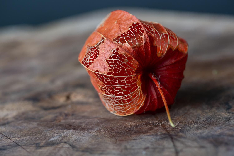 Lampignonplant voor bewerking